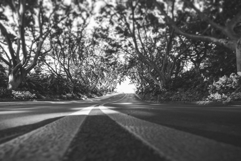 Road lined with trees from low perspective